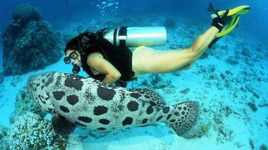 Дайвинг на Большом Барьерном рифе