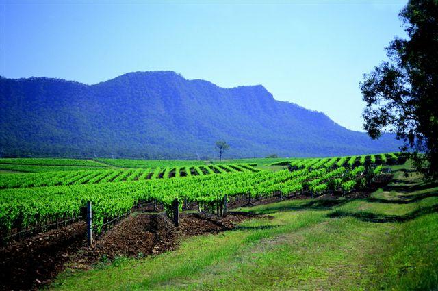 Винодельческая долина